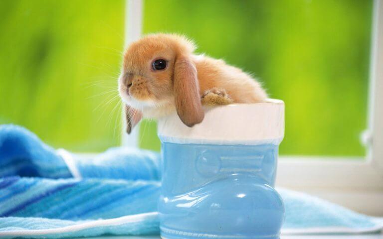 conejito bebé en una taza